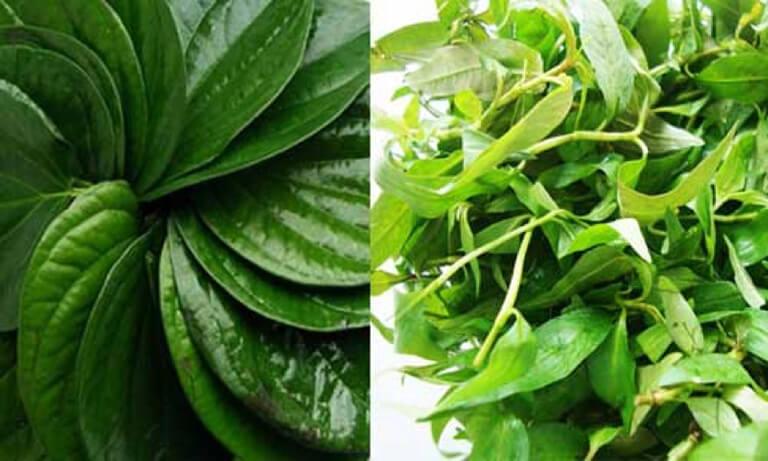 Chữa hắc lào bằng lá trầu không và rau răm