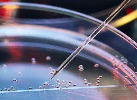 Tìm hiểu chung về tế bào gốc
