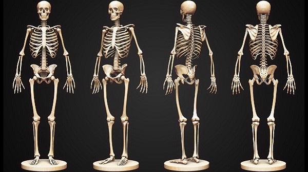 Cơ thể người khi mới sinh ra có bao nhiêu xương?